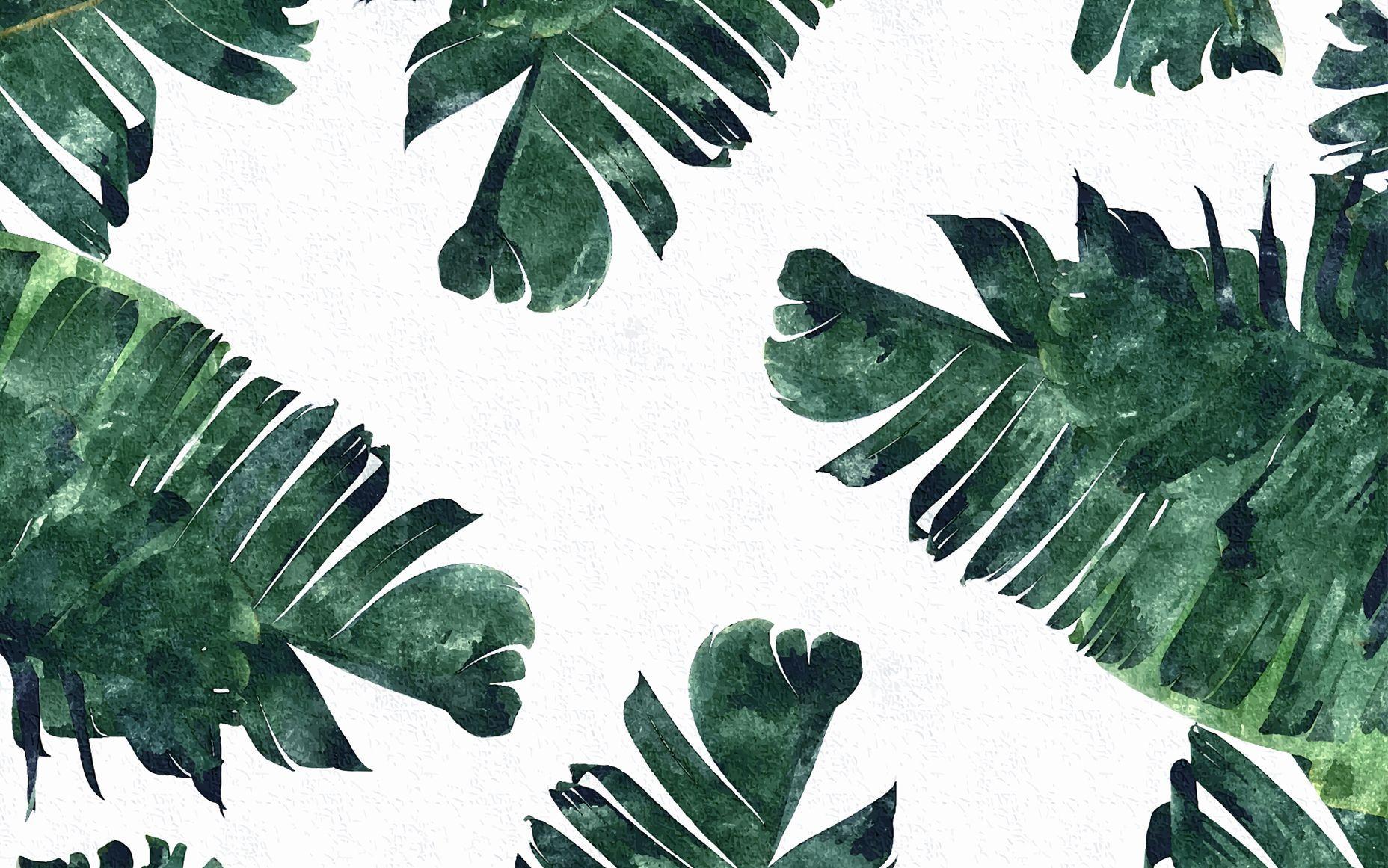 50 Tropical Leaves Desktop Wallpapers   Download at WallpaperBro 1856x1161