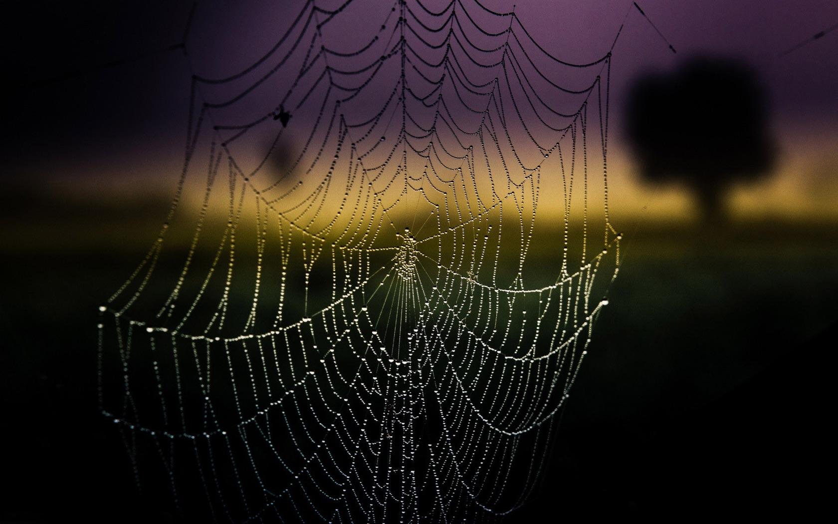 Wet spider web wallpaper 11774 1680x1050