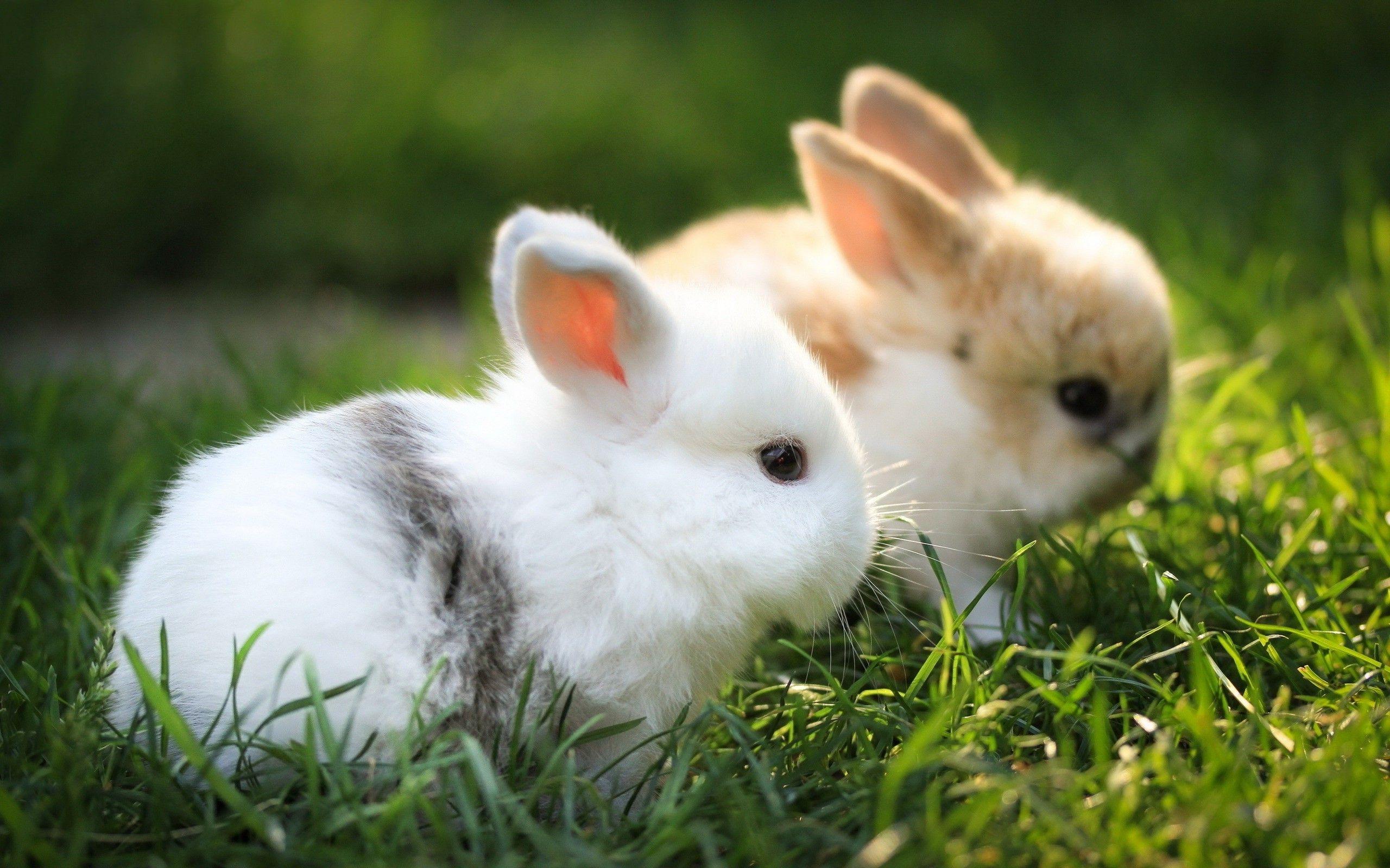 27] Cute White Baby Rabbit Wallpaper on WallpaperSafari 2560x1600