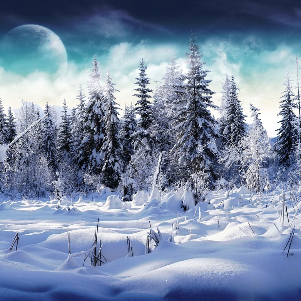 Snowy trees Wallpaper for iPad and Galaxy Tab   Tablet iPad 1024x1024