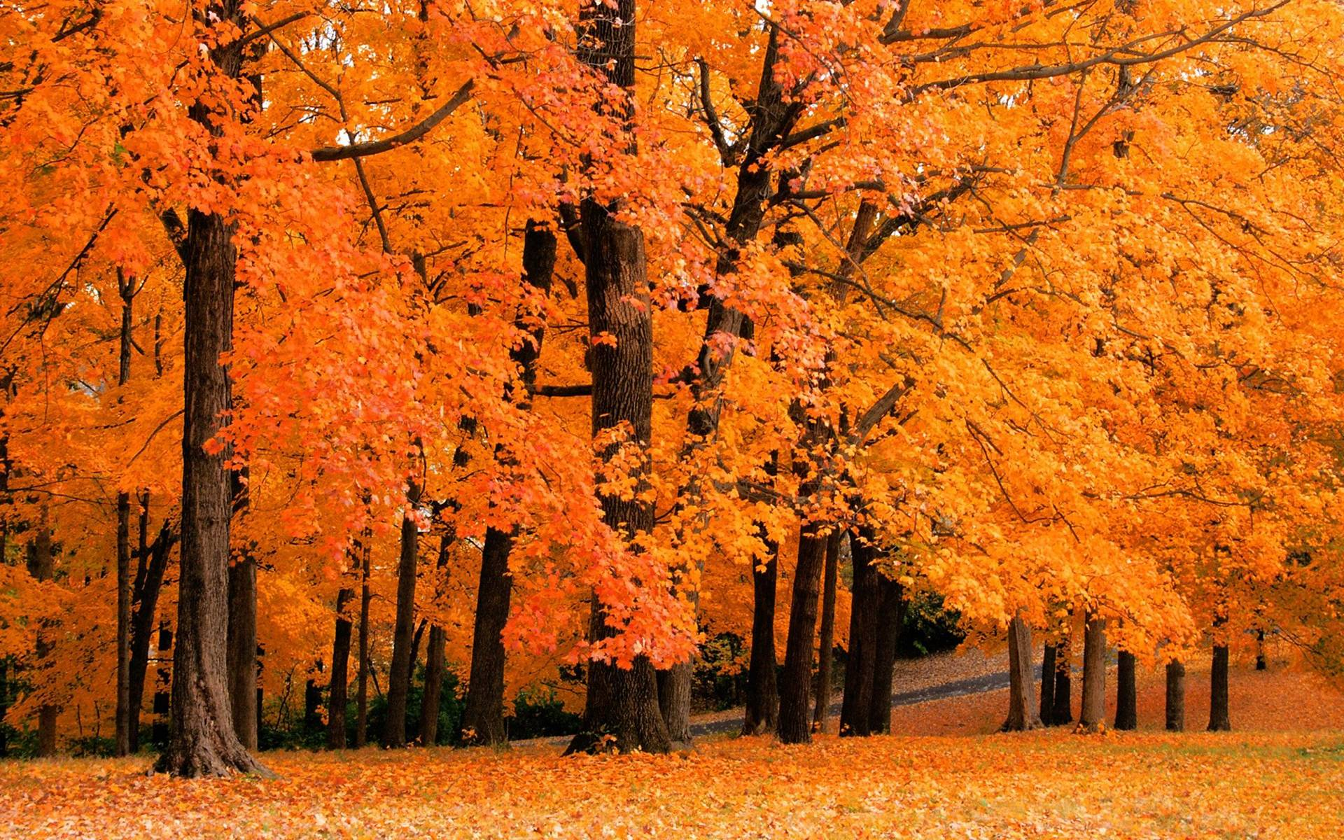 77 Free Fall Foliage Wallpaper On Wallpapersafari