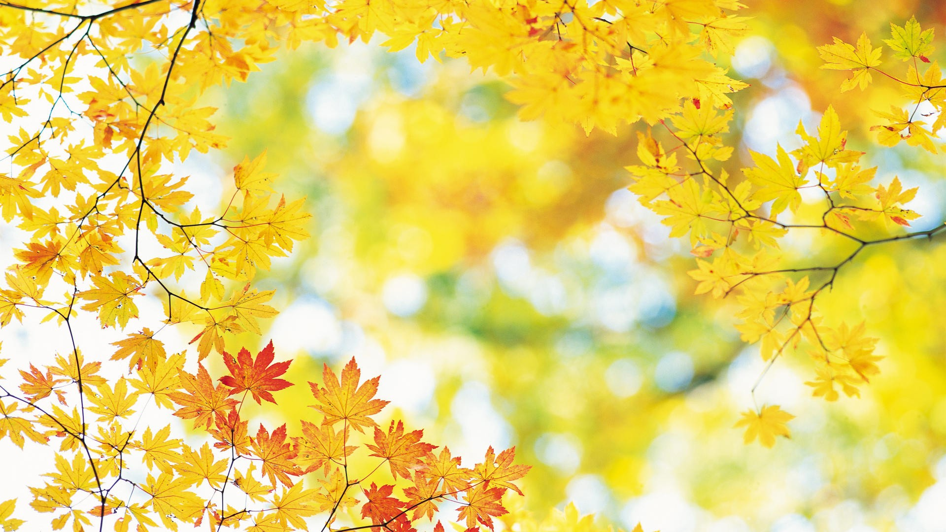 Download Autumn Leaves Wallpaper 1920x1080 Wallpoper 390091 1920x1080