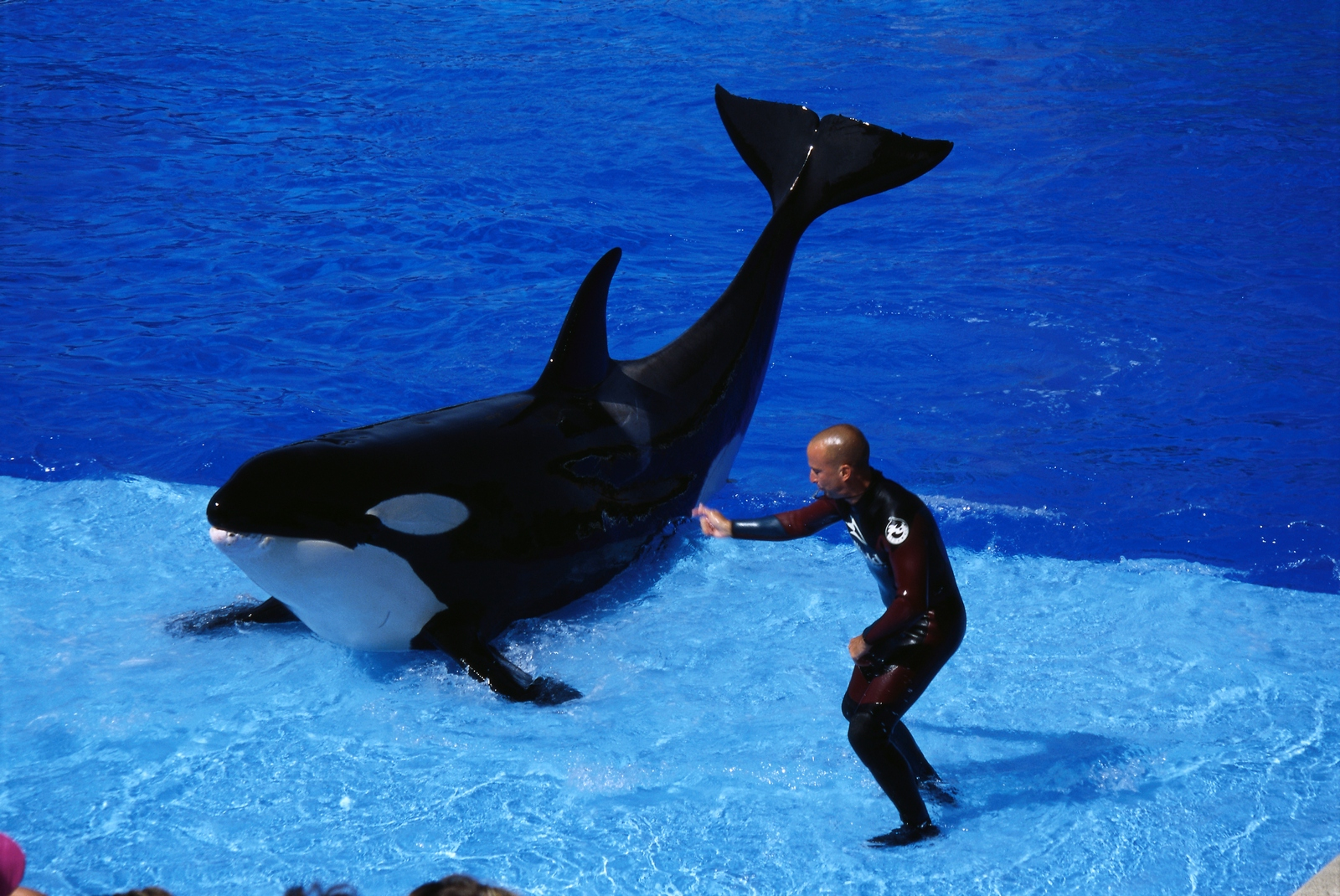 killer whales wallpapers   Funny Animals 1600x1070