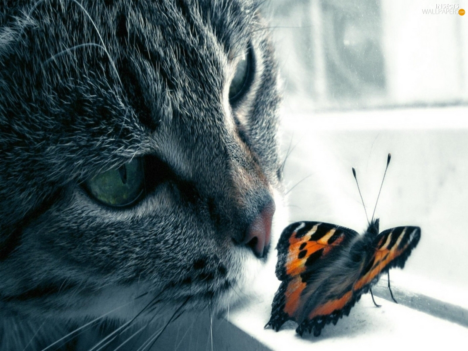 butterfly Window cat   Insects wallpapers 1600x1200 1600x1200