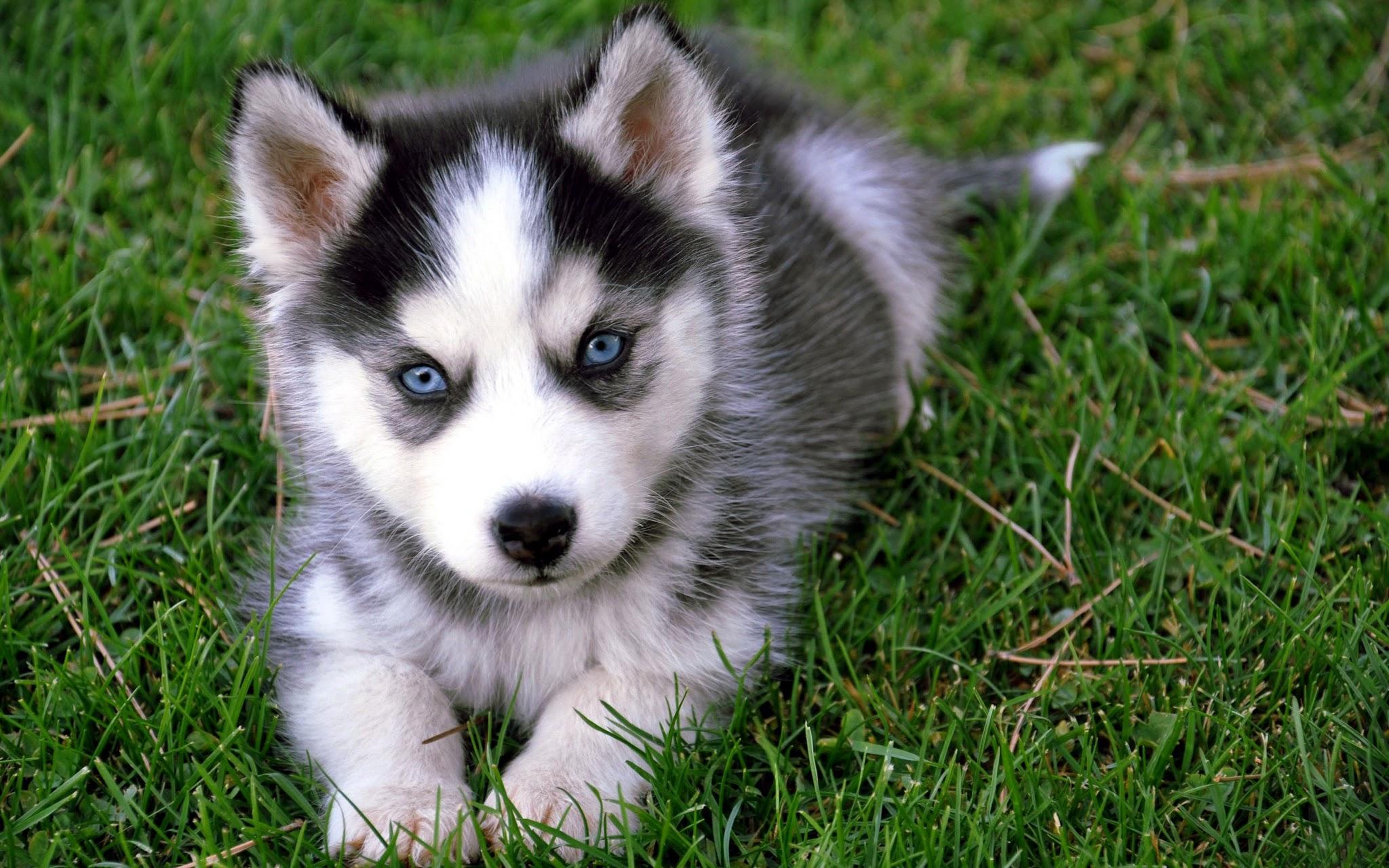 Cute Puppy Dog in Grass Full HD Wallpaper Hd Wallpaper 2048x1280