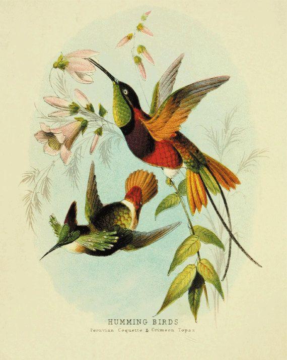 Hummingbirds Vintage Bird Print Nature print by AntiqueWallArt 1000 570x713