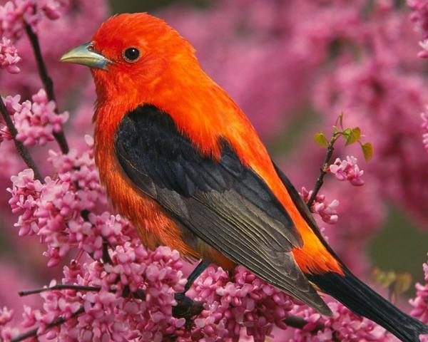 birds hd wallpapers tags birds pink flowers description birds 600x480