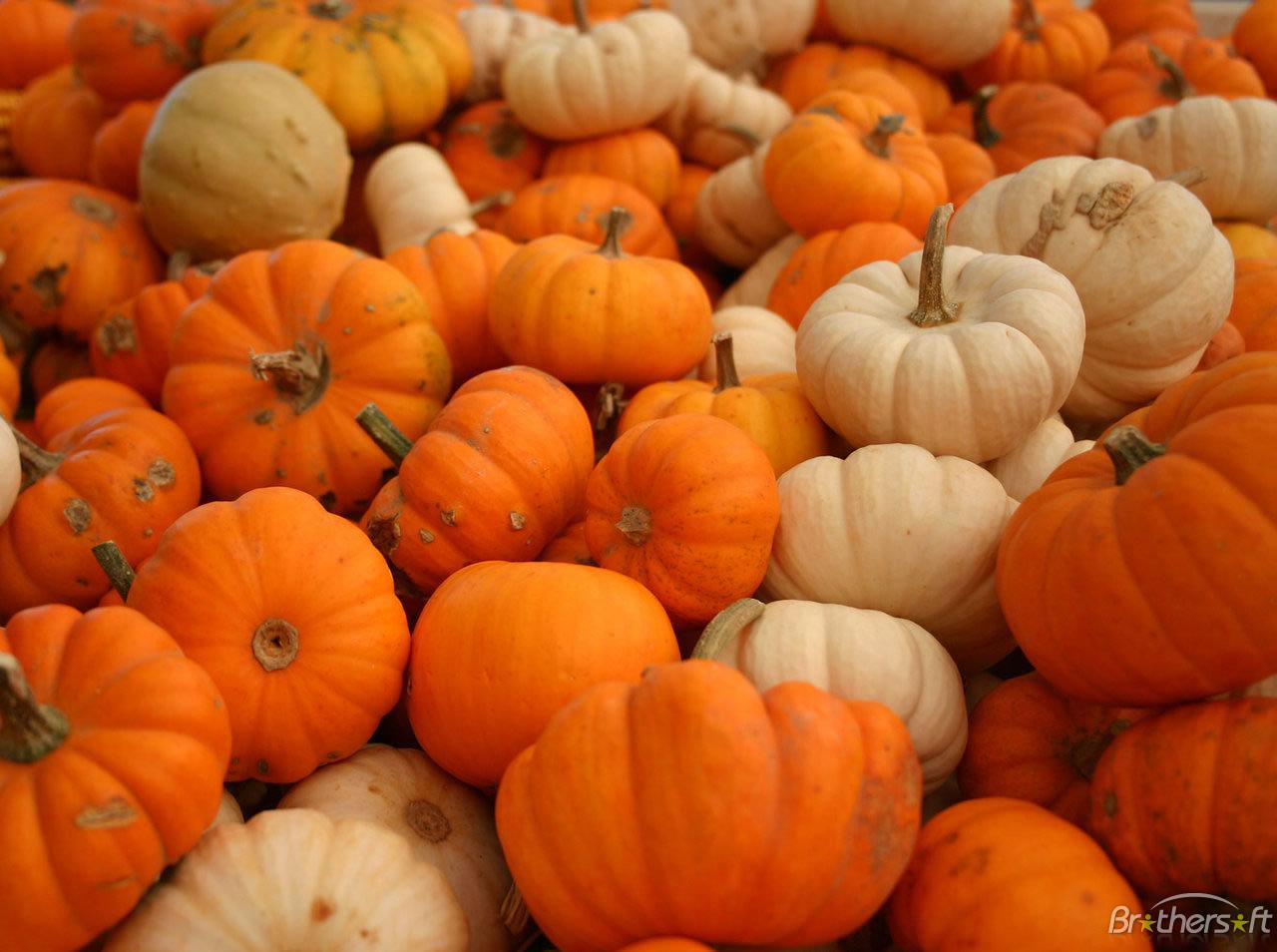 of Pumpkins Wallpaper Plenty of Pumpkins Wallpaper Download 1280x954