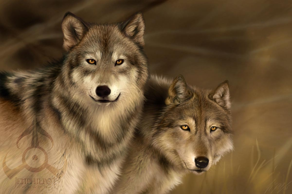 Wolves Wolves 1200x800