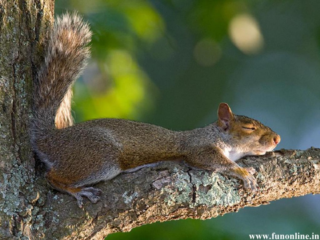 Baby squirrel wallpaper wallpapersafari - Funny squirrel backgrounds ...