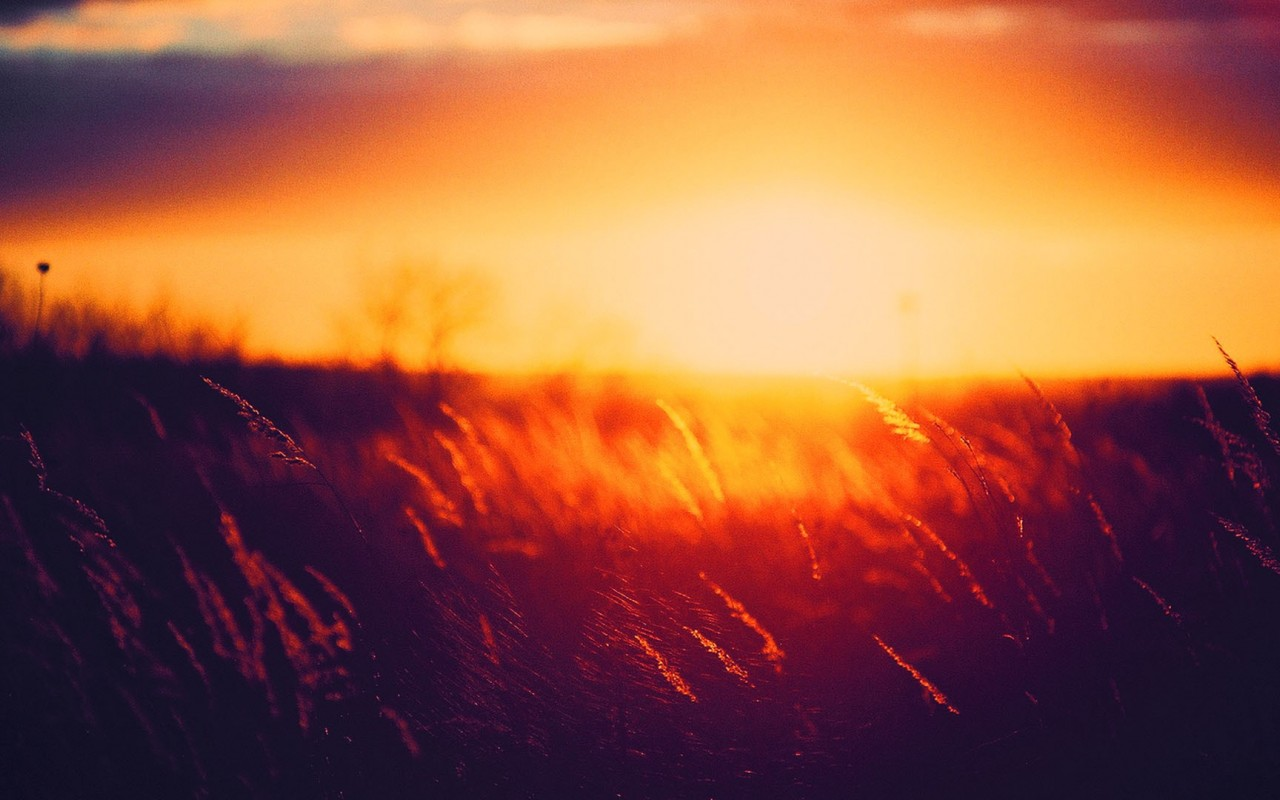 summer sunset wallpaper   Wallpaper 1280x800