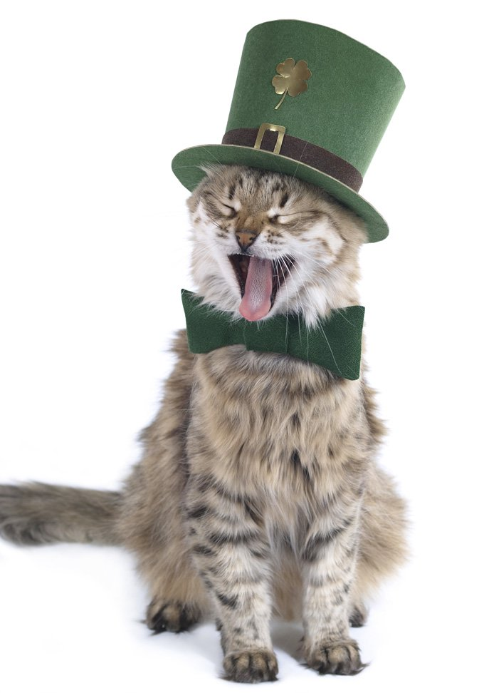 St Patricks Day Cat Wallpaper 680x972 8665O3L   Picseriocom 680x972
