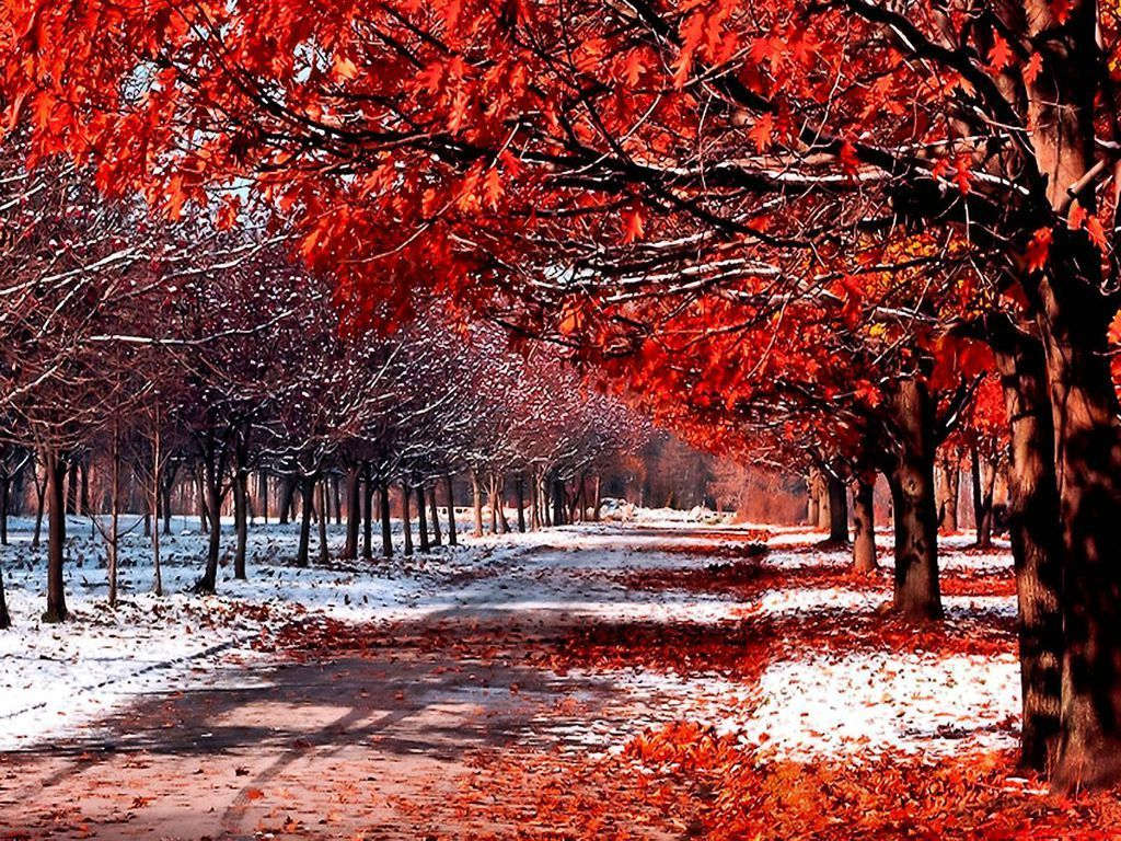 snow and leaves   Daydreaming Wallpaper 18394792 1024x768