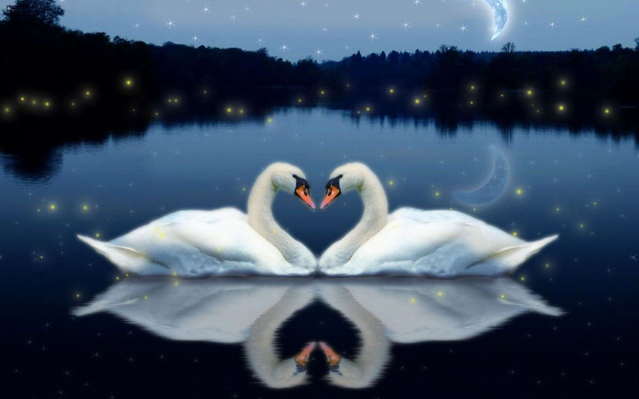 Free Download Love Birds Wallpaper 1280x800 For Your Desktop Mobile Tablet Explore 76 Wallpaper Of Love Birds Free Wallpapers And Screensavers Birds Free Love Screensavers And Wallpaper Bird Wallpaper For Desktop