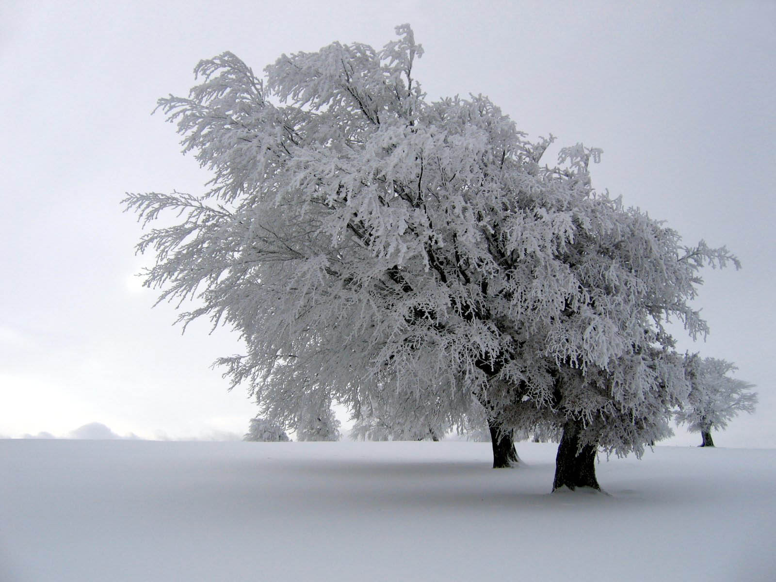 Winter Backgrounds Photography Backgrounds winter photos 1600x1200