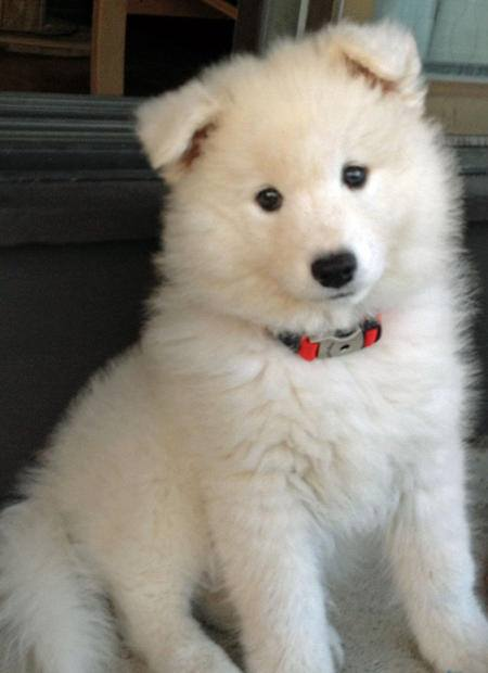 are viewing right now the image Cute Puppies Wallpapers Download 450x620