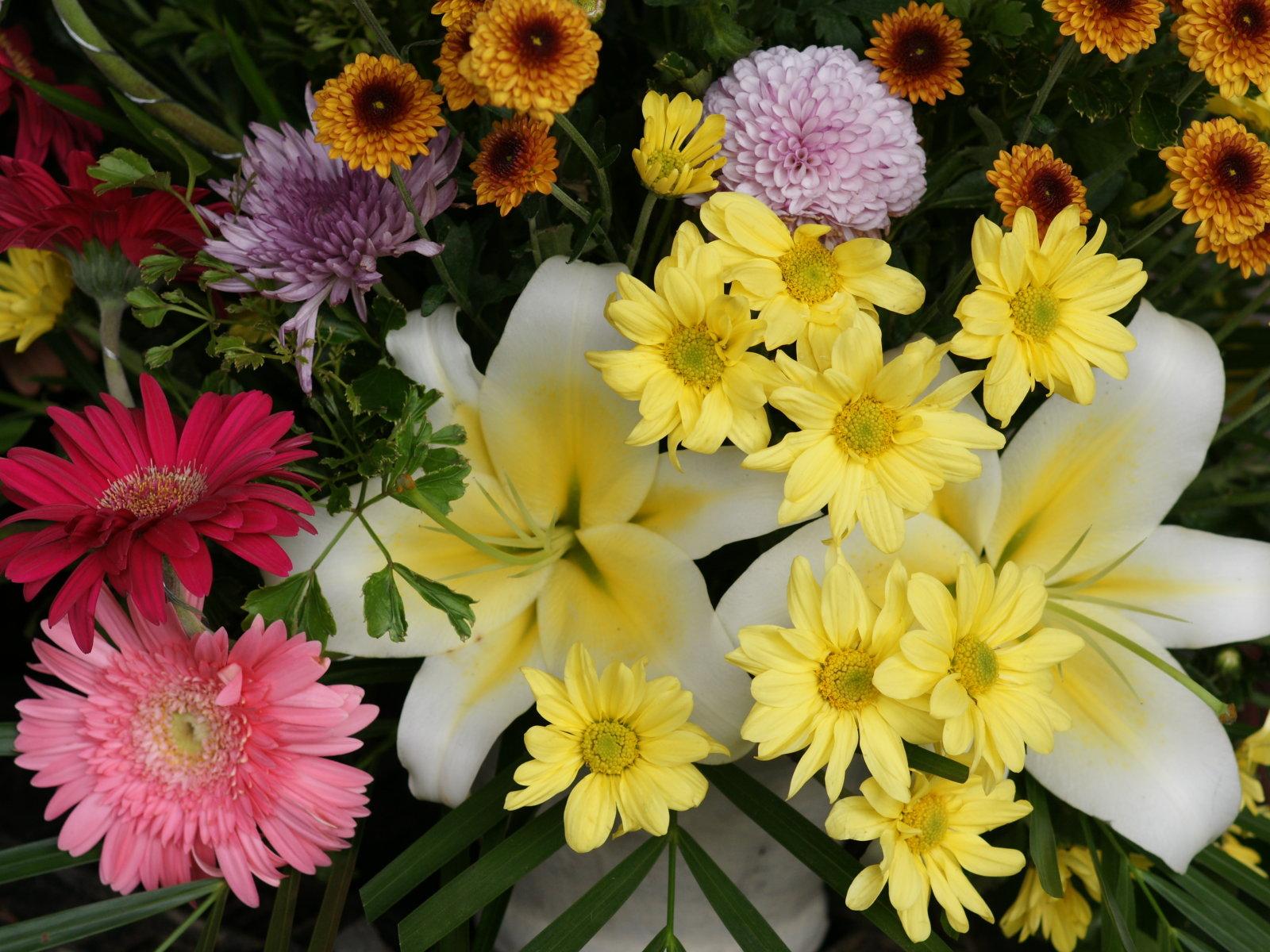 Beautiful Flower Wallpaper Wallpapersafari