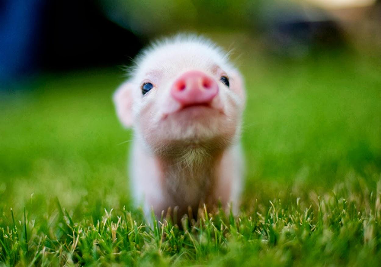 cute baby animals       Animal Info 1250x875