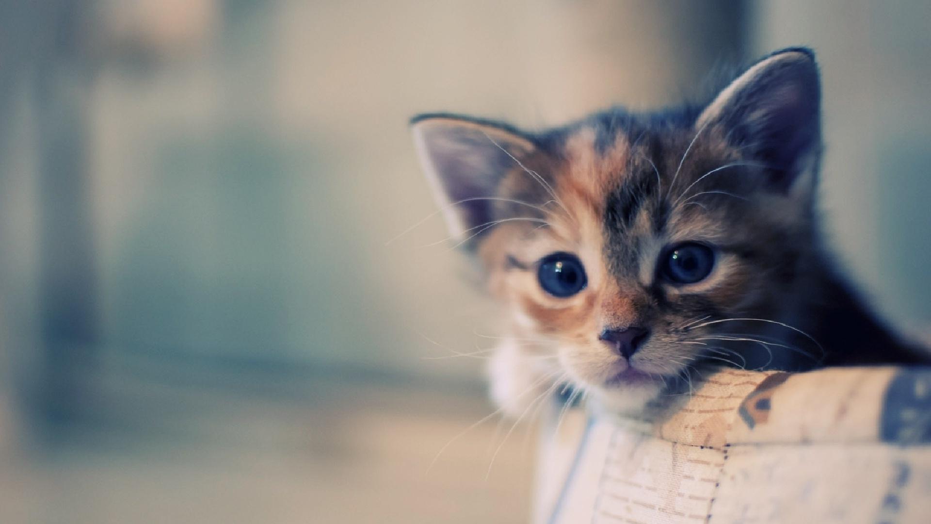 35 1920x1080 cat wallpaper on wallpapersafari - Cute kittens hd wallpaper free download ...