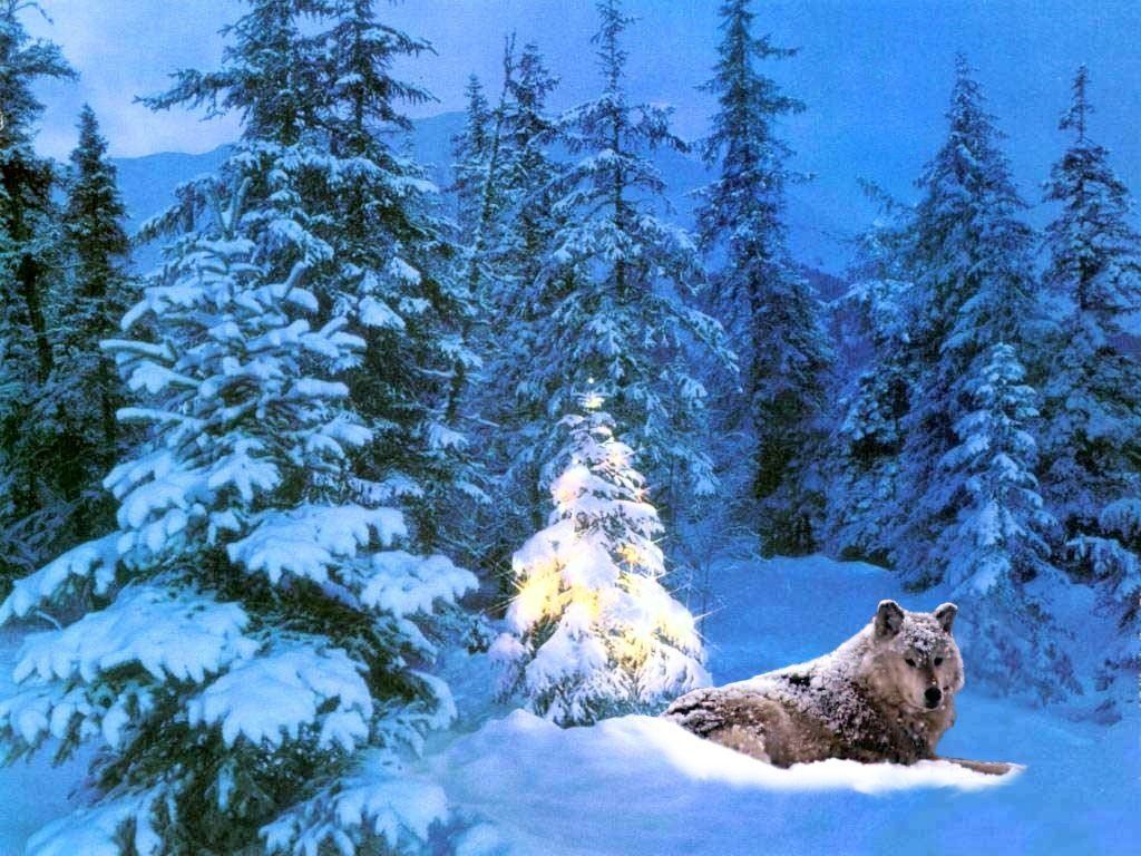 Download Christmas Animals wallpaper christmas wallpaper wolf 1024x768