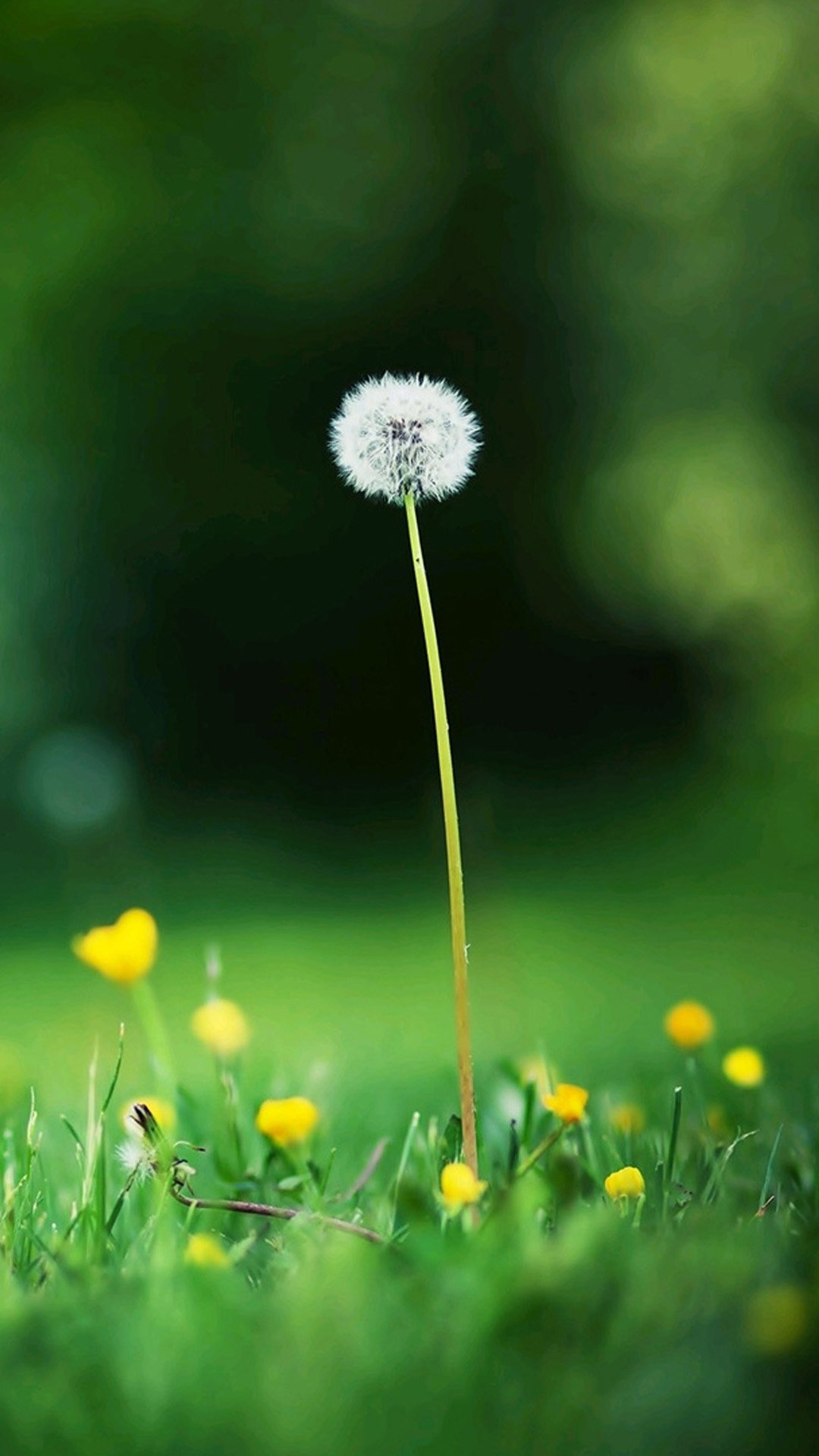 Autumn Dandelion Samsung Wallpapers, Samsung Galaxy S5, Galaxy S4 ...