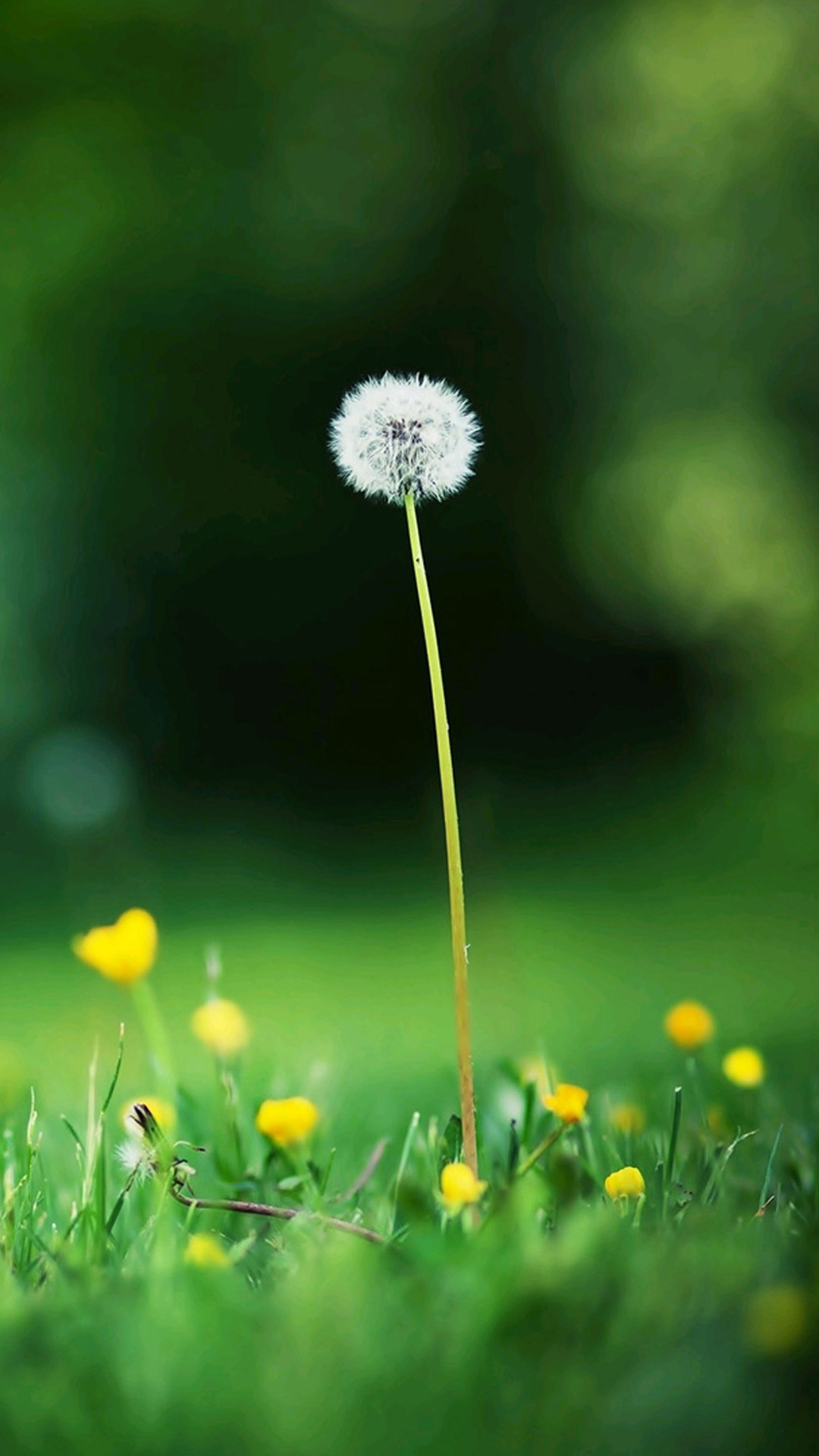Autumn Dandelion Samsung Wallpapers Samsung Galaxy S5 Galaxy S4 1080x1920