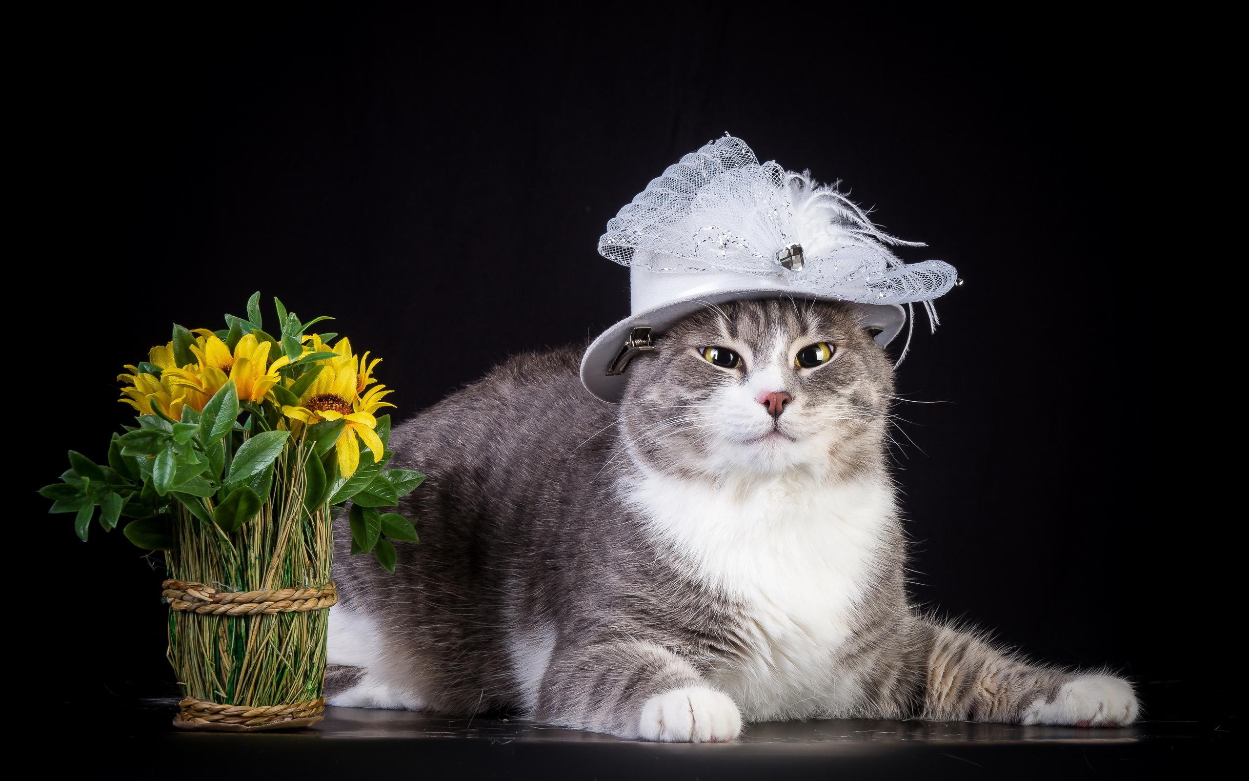 Cat in the Hat Wallpaper 2560x1600