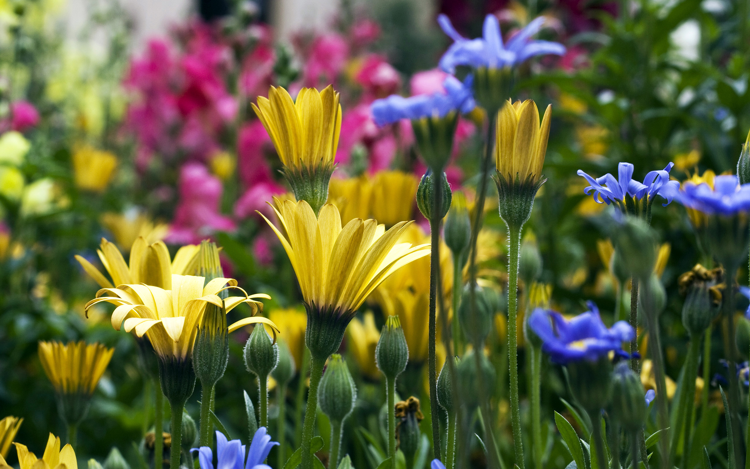 Scenery Wallpaper Includes Several Flowers Sure to Beautify 2560x1600