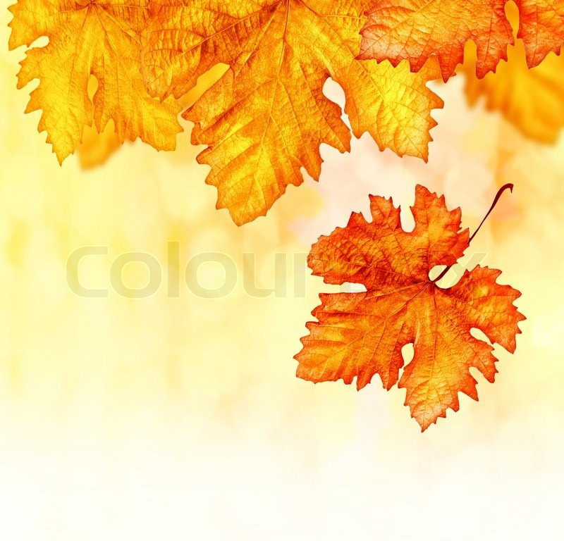 Wallpaper Borders on Orange Autumnal Backdrop Dry Leaves Border Old 800x768