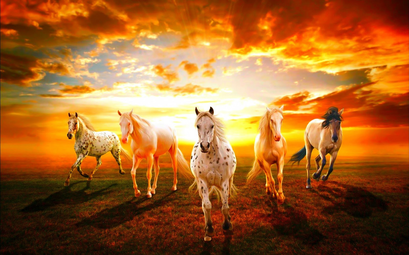 Free Download Wild Horses Hd Desktop Wallpaper 1600x1000 For