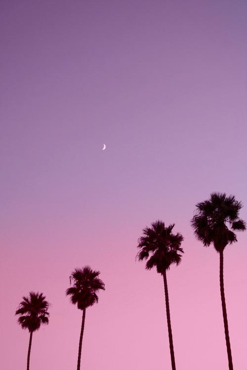 Free Download Palm Trees Sky Beauty Moon Tumblr Artsy