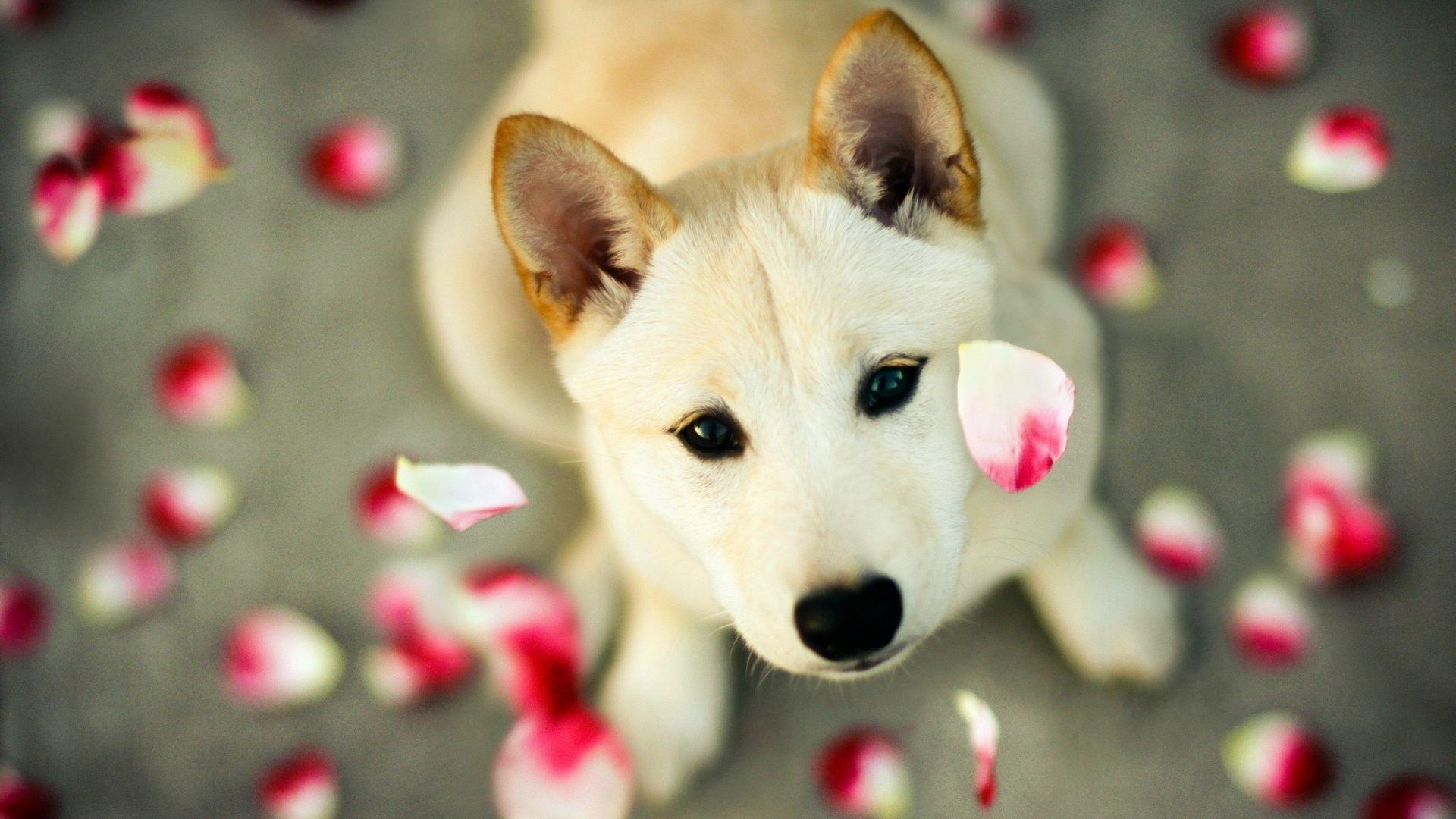 Cute Dog Wallpapers 1920x1080