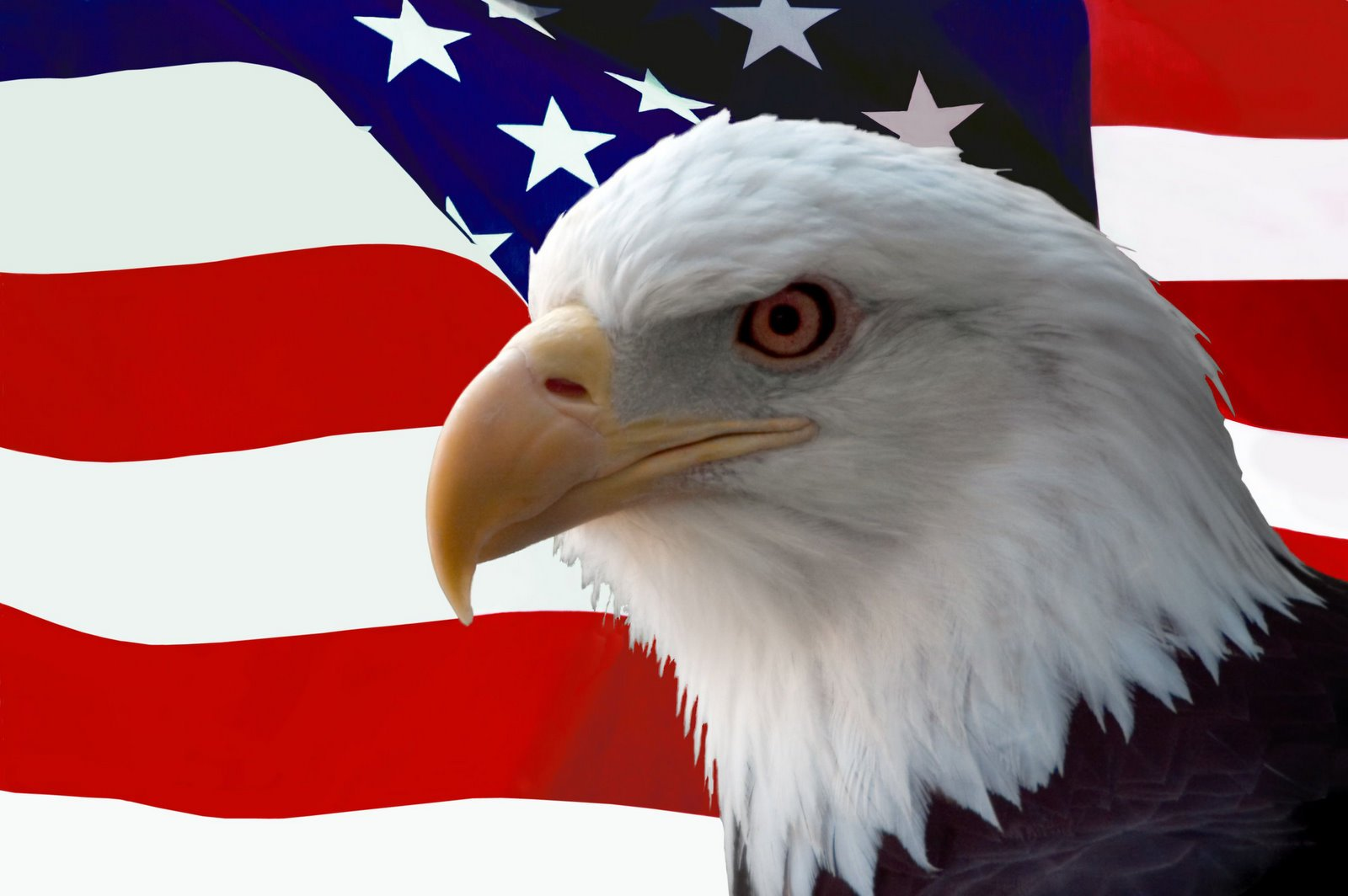 American Bald Eagle in Front of American Flag 1600x1064