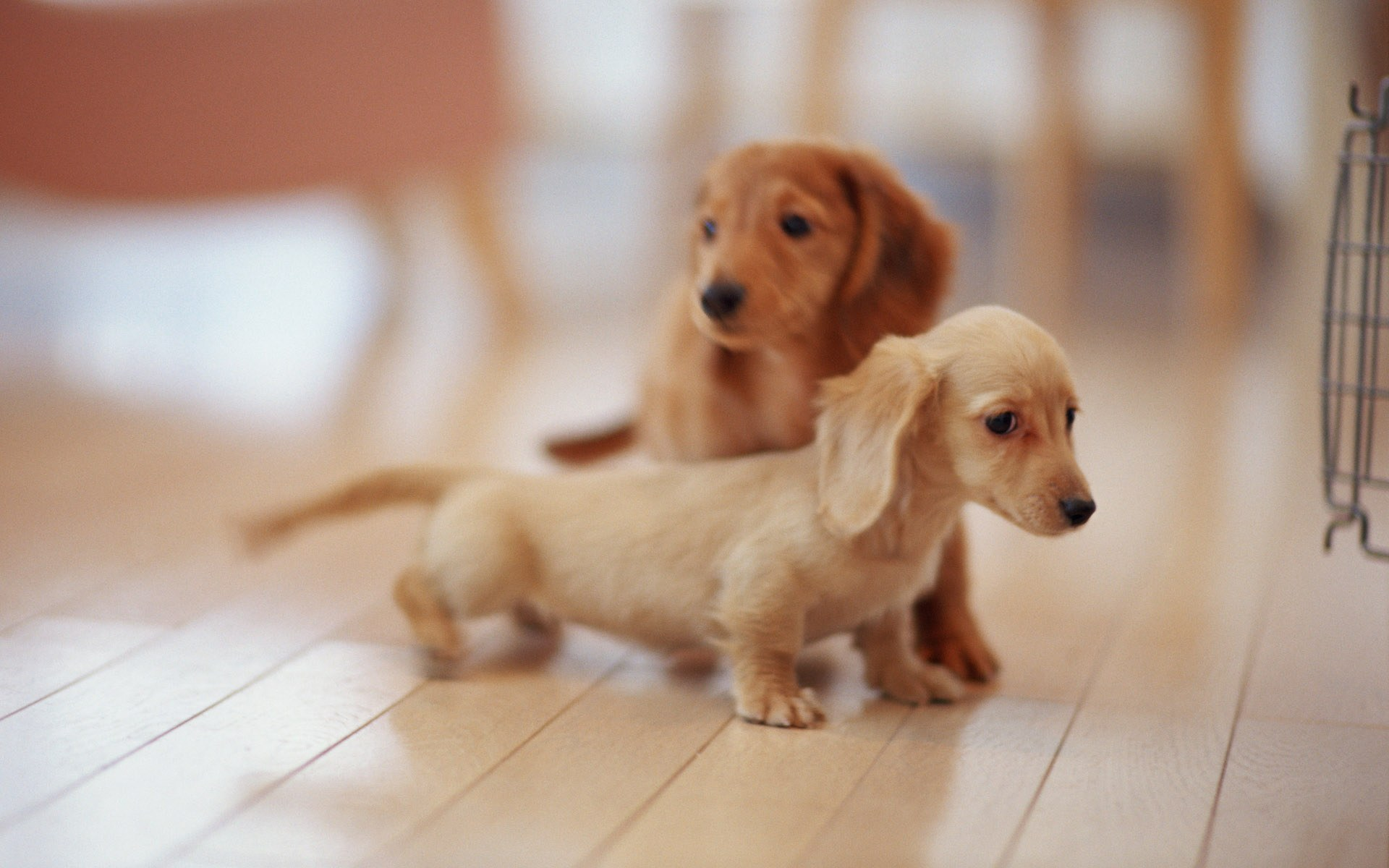 Funny Little Puppies Exclusive HD Wallpapers 5385 1920x1200