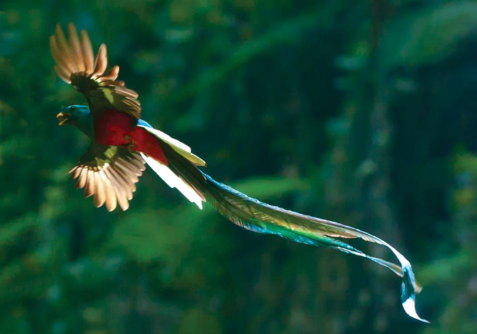 Quetzal Photo Quetzal 10062 960x673