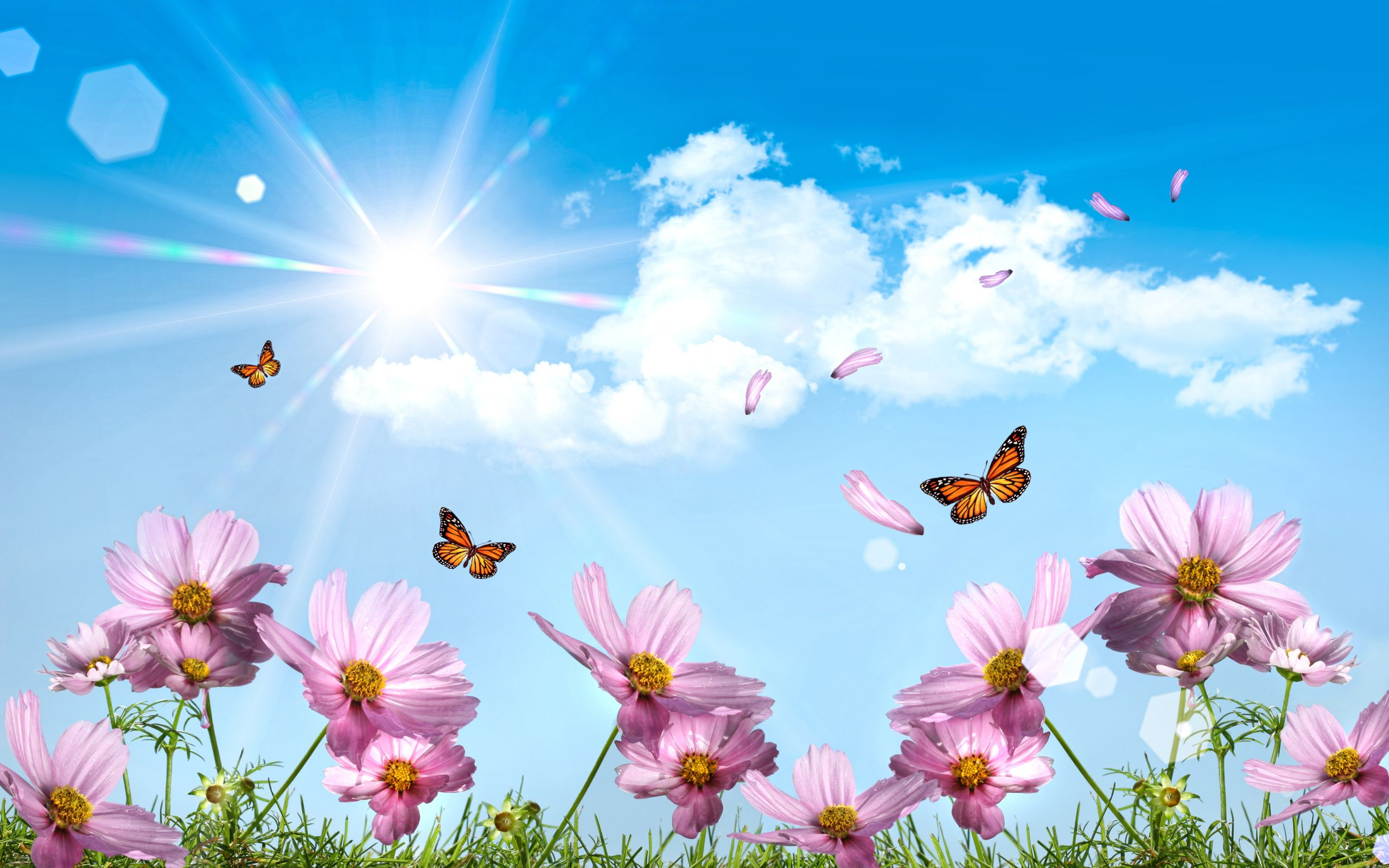 Butterflies Desktop Wallpapers HD Wallpaper 2560x1600