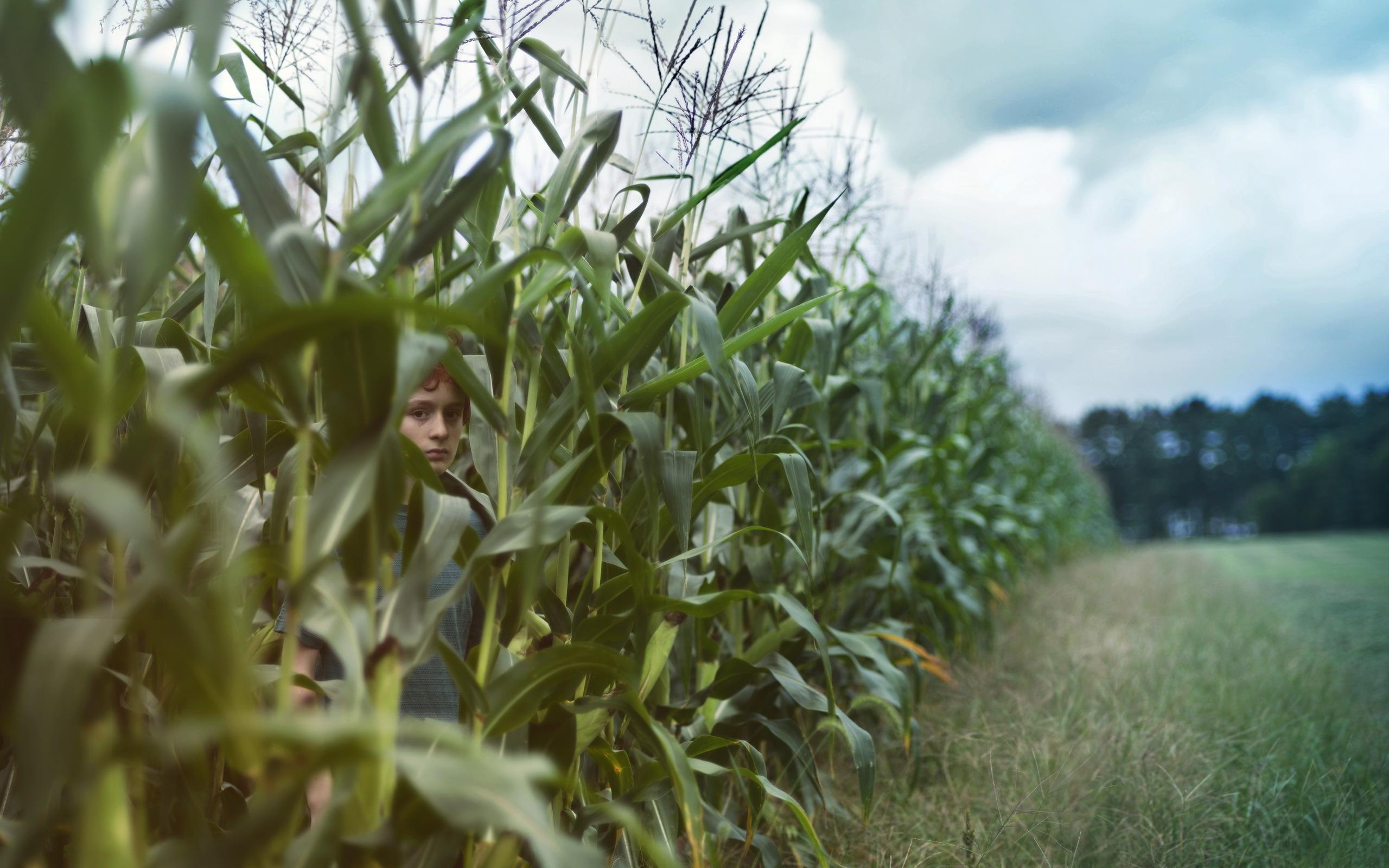 High definition photo of boy wallpaper of summer corn ImageBank 2560x1600