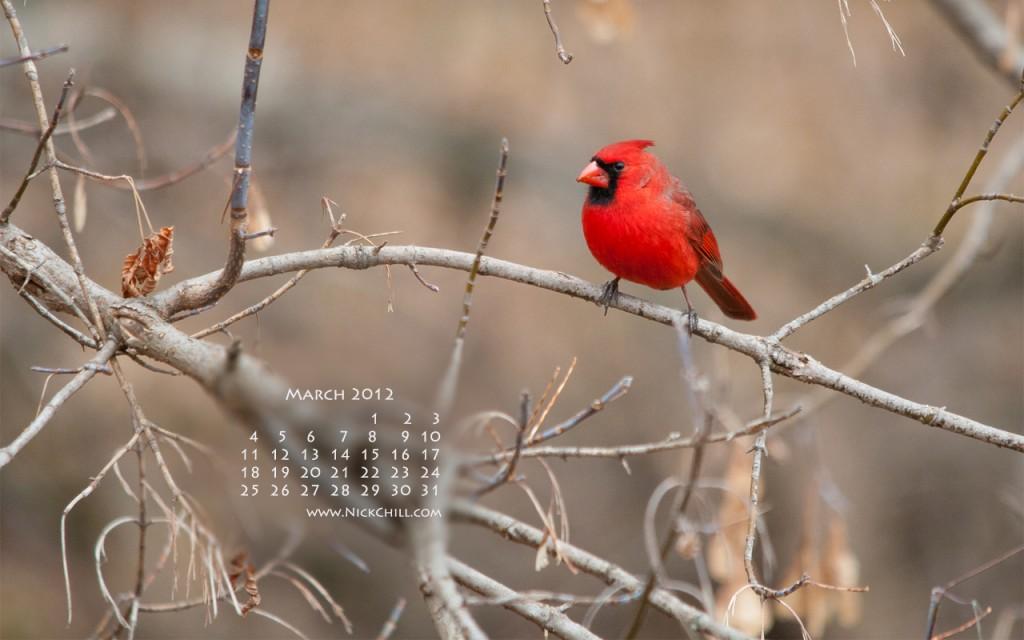 Free Cardinal Desktop Wallpaper Wallpapersafari