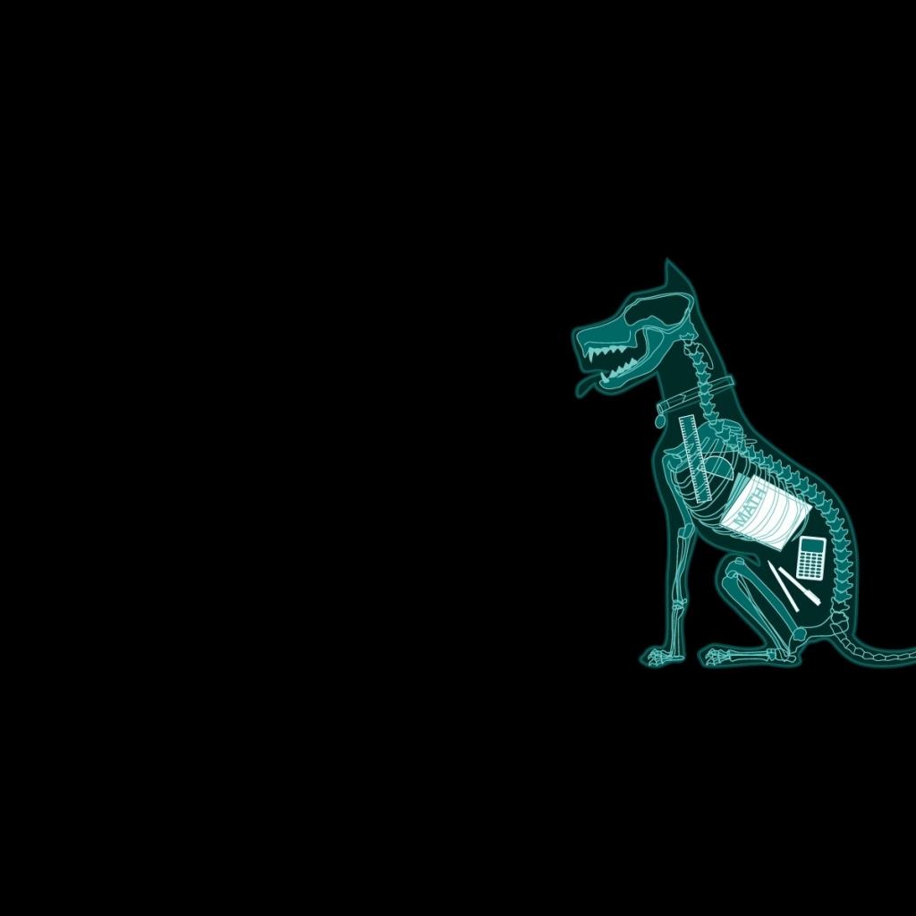 dark humor dogs funny mathematics xray simple background black 1024x1024