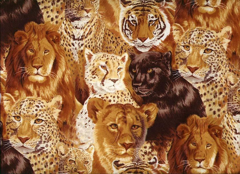 Big Cats Wallpaper - WallpaperSafari