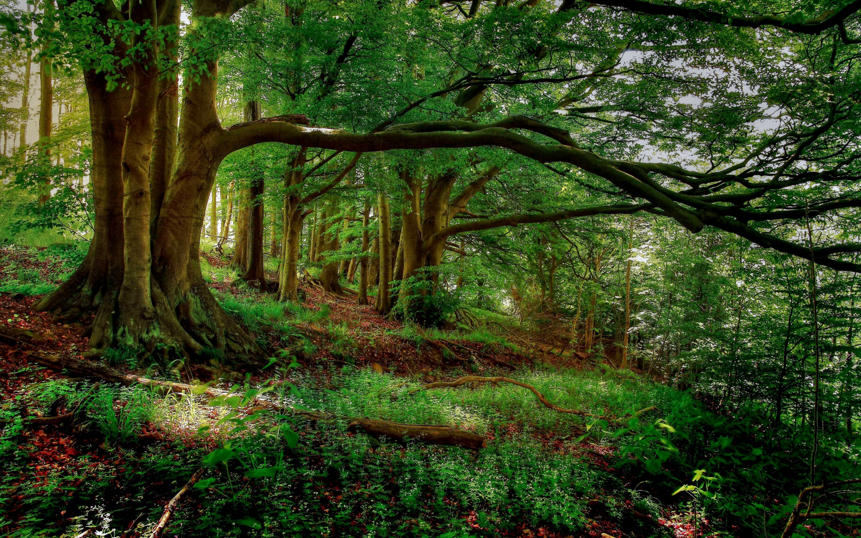 Forest Wallpapers HD Wallpapers HD BackgroundsTumblr Backgrounds 2880x1800