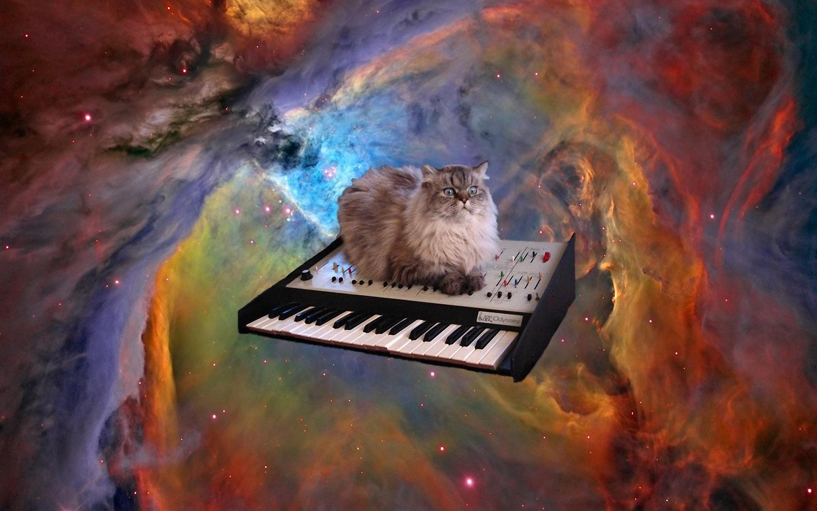 cat in space Tapety na Komputer Ta Pulpitu 1680x1050 ID475224 1680x1050