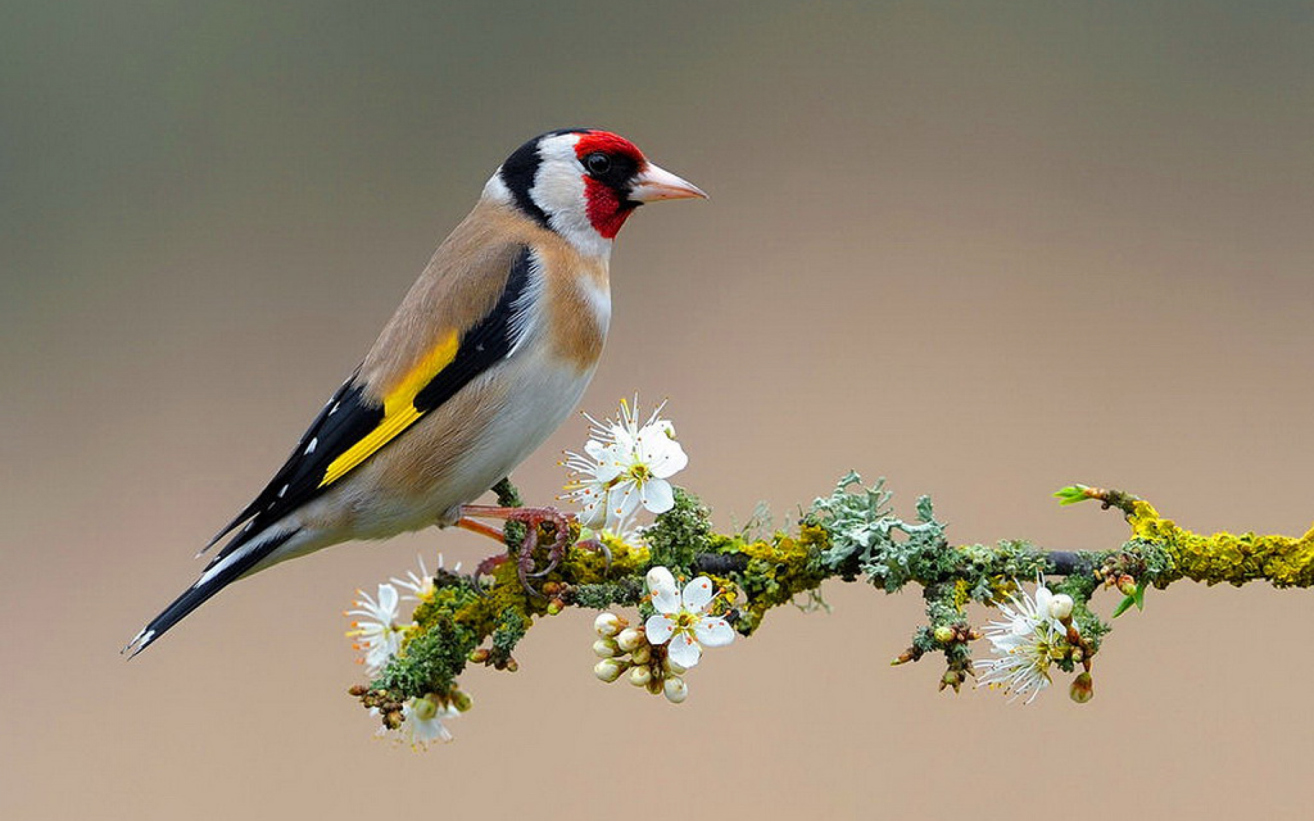 Bird On Flower Branch 2560x1600 6606 HD Wallpaper Res 2560x1600 2560x1600