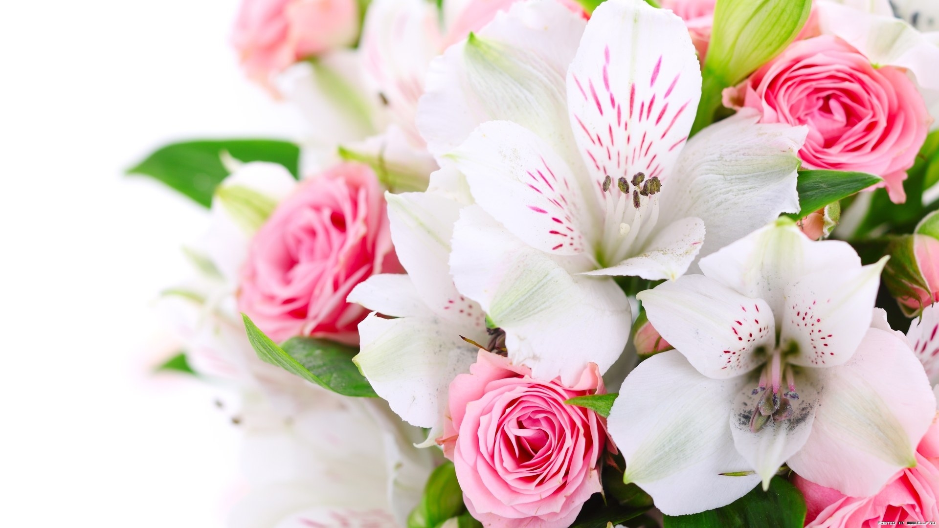 HD Beautiful Flowers Wallpapers and Photos 1920x1080 px By June 1920x1080