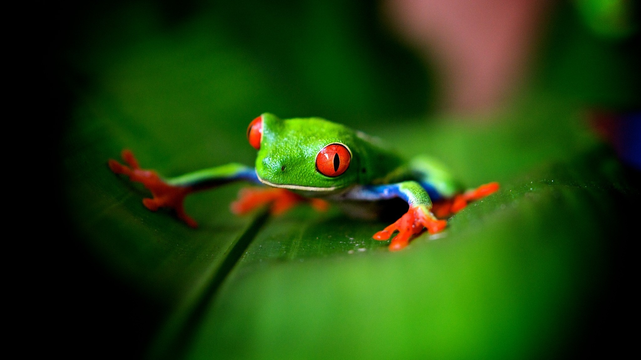 Cute Green Frog 2048 x 1152 Download Close 2048x1152