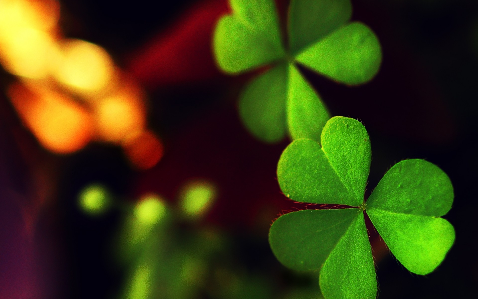 Clover Wallpapers Pictures Images 1920x1200