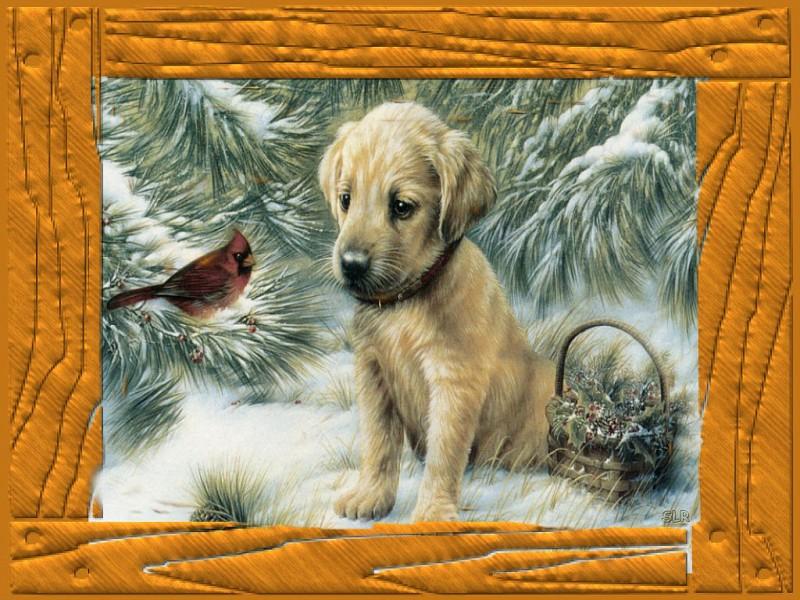 Photo winter puppy Wallpaper 12 23 09 album Sherryrequest Fotki 800x600