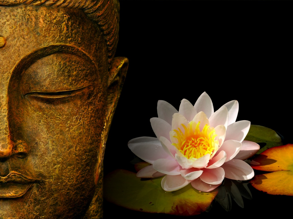 buddha wallpapers photos pictures h2o lily 1024x765 How To Use Your 1180x882