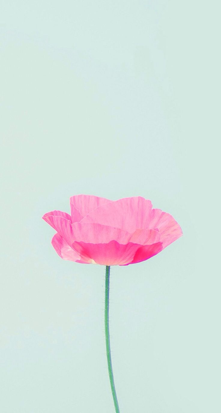 image like iphone 5c wallpaper pink have the power to change the mood 736x1376