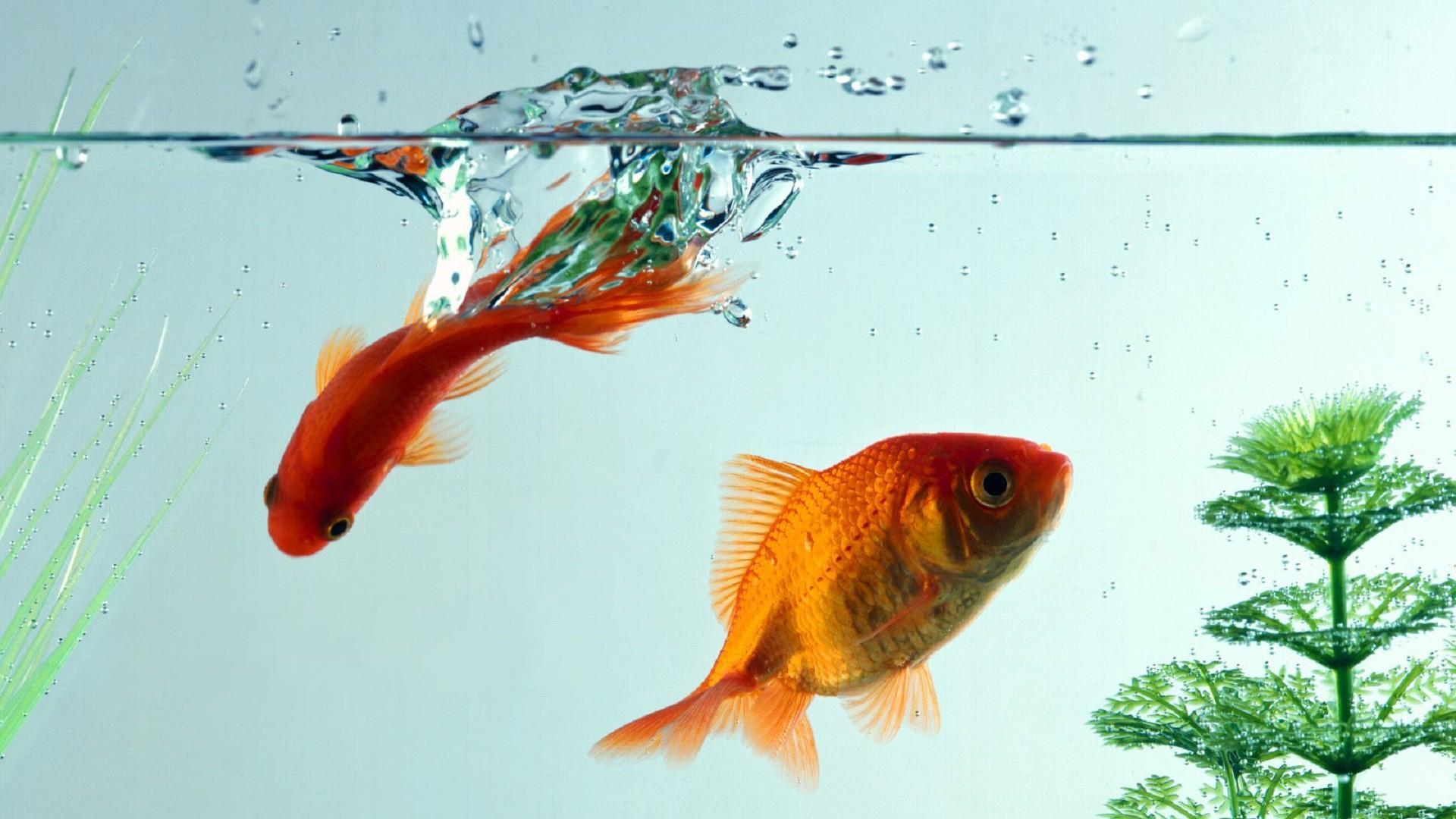 cute fish wallpaper - photo #25